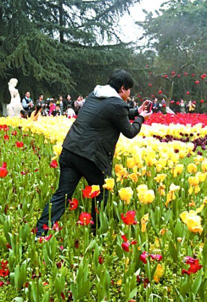 花卉园,男子翻过围栏在花海中拍照