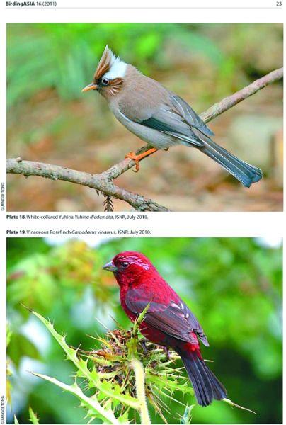 描写动物的英语句子图片