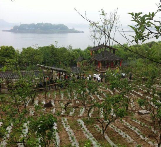 """长寿湖""""百寿园""""一角"""