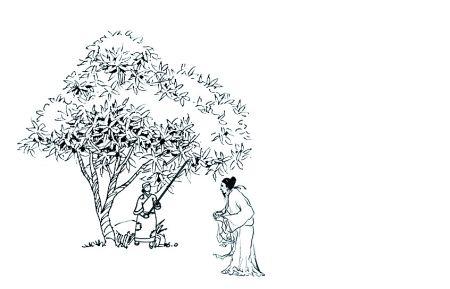 珍珠姑娘简笔画展示