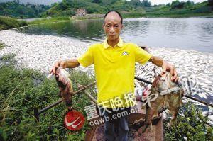 水库里养的鱼陆续死亡