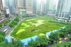 """渝中区较场口的一块闲置地块如今已成为名副其实的""""都市湿地"""",与外围繁忙的交通形成了鲜明的对比"""