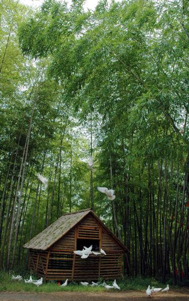 清幽惬意的竹林; 重庆雨台山风景区_重庆雨台山风景区旅游_重庆雨台山