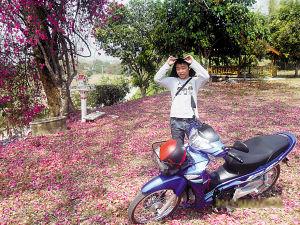 泰国小城清迈的满地落花很美