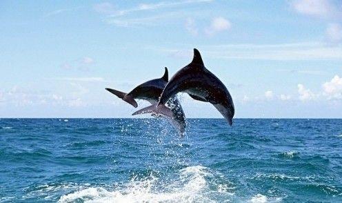 台湾鲸鱼种类众多-黄金周宝岛旅游 鲸喜 不断 跟着专家赏台湾鲸豚
