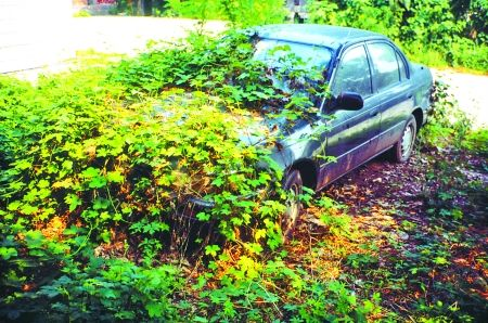 小轿车的车身已经快被绿色植物掩盖了