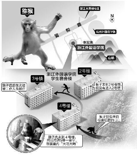 公猕猴闯入大学女生宿舍 引发女生尖叫连连 图图片