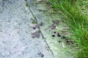 昨日,冉家坝悦城小区,残留着女子受伤后滴在地上的血迹。 本版图/重庆晨报见习记者 苑铁力