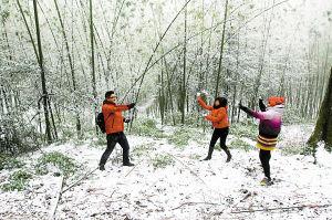 缙云山飘舞着漫天雪花,积雪达到5厘米左右