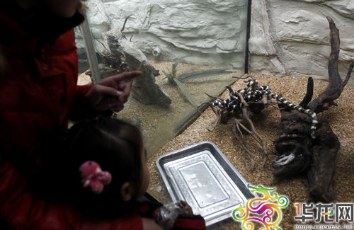 重庆动物园爬行动物馆
