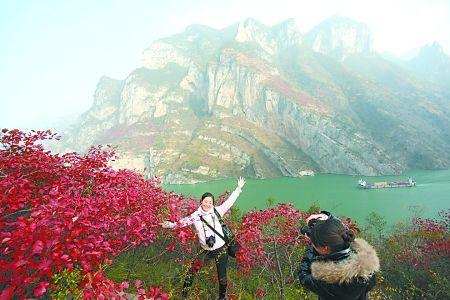 秋天观三峡红叶 吴珊 摄