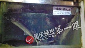 鱼柜明显位置标明中华鲟