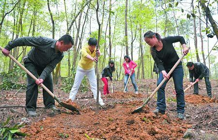 昨天是植树节,不少市民来到南山小垭口自发参加植树活动,植树点工作人员介绍,当天有100多市民上山植树,栽种香樟、黄葛树、天竺桂等树苗500余株。记者 吴珊 摄影报道