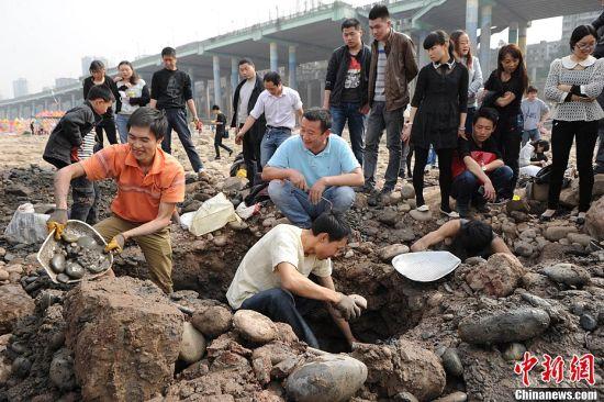 3月13日,不少重庆市民在嘉陵江磁器口段淘宝。随着嘉陵江的水位不断下降,有市民在裸露的河床上挖到金属饰物,有的市民甚至还挖到古钱币。中新社发陈超 摄
