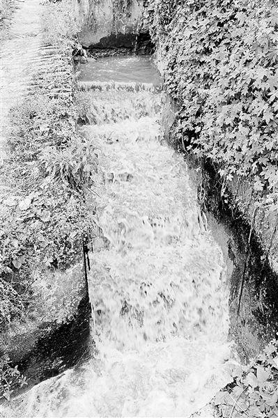 3月23日,小泉支流南岸区南山街道金竹村附近河段的水体又黑又臭。