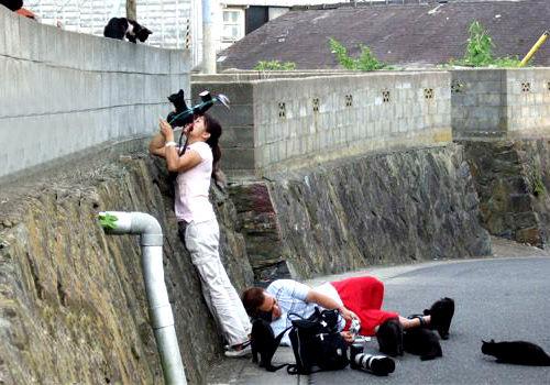 游客在岛上拍猫