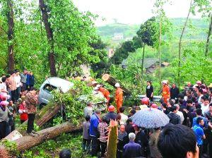 昨日,垫江大风,三棵大树砸中一辆面包车,司机不幸遇难