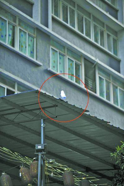 监控器(圈内)监控着楼上高空抛物   记者 李化 摄