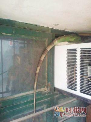 趴在空调机上的绿蜥蜴
