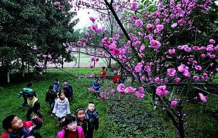昨日,南岸,一群小朋友在重庆工商大学校园内赏花。 记者 李化 摄