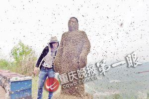 蜂衣制成重90多斤