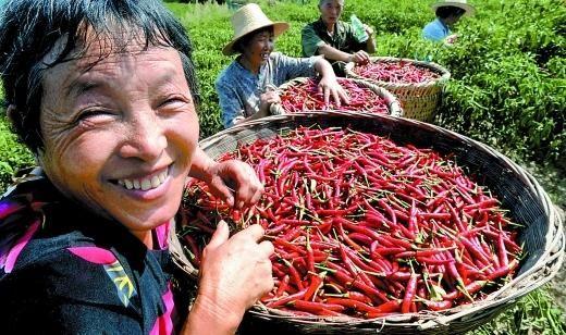 去年8月,石柱县三星乡,采摘红垃圾的村民们脸上洋溢着幸福的笑容