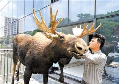 237件野生动物标本,已经全部运抵重庆自然博物馆