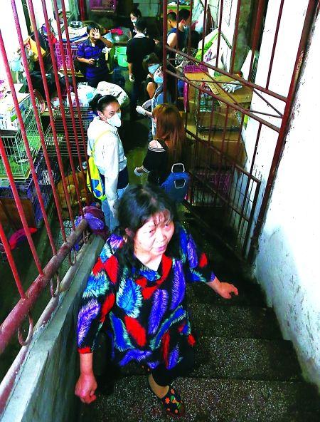 杨玉华从玉林买回100多只猫狗都放在楼底的狗舍中