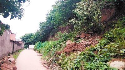 一棵枯树悬在坡上,极有可能滑下来,横在坡下的公路上.