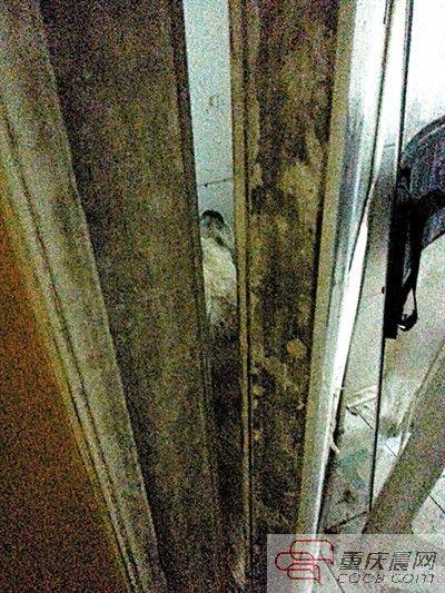 流浪狗被逼入厕所。