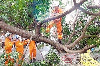 昨天,行道树砸中出租车,也造成交通拥堵。