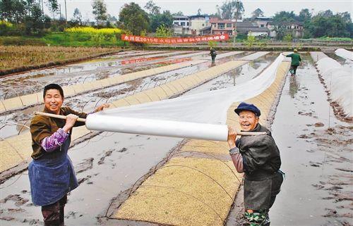 永川区临江镇普安村三社,专业服务队队员趁着好天气,忙着喷壮秧剂、搭棚、铺膜,进行湿润育秧。