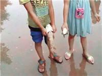 重庆多个区县昨下暴雨 孩子们在操场上捞到鱼