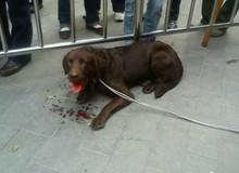 狗狗被砍伤事件已在查
