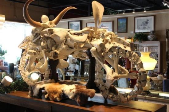 山羊骨骼结构图片