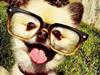 宠物狗的爆笑自拍