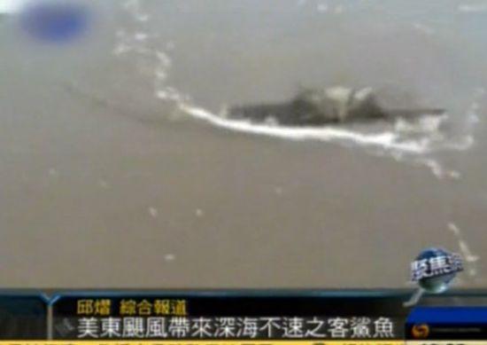 飓风桑迪袭击美国 深海鲨鱼被席卷上岸