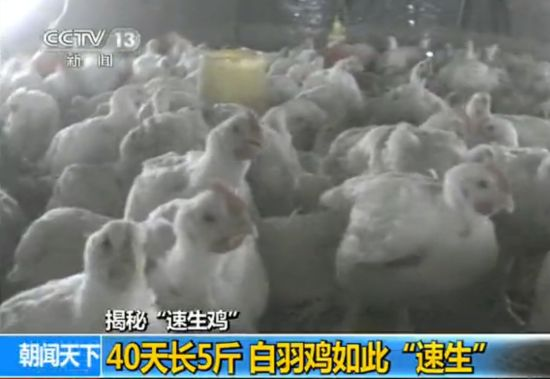 """""""速生鸡""""曝光"""