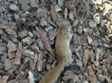 视频:男子踩死西湖边小松鼠 妻子在旁大笑