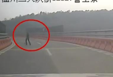 高速路惊险抓狗