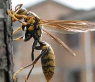 男子遇黄蜂惊叫被女友鄙视当场分手