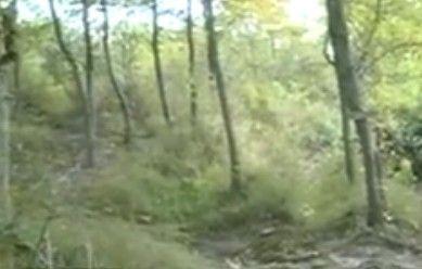 女孩看病遭奸杀 下身赤裸树枝遮盖