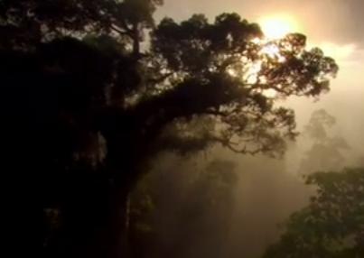视频:《大自然在说话》震撼发声