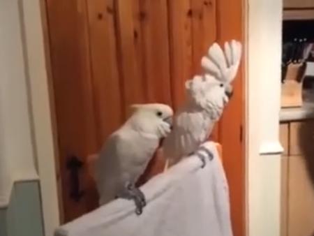 富有艺术气息的鹦鹉