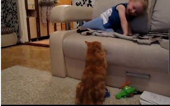 愤怒猫教训小男孩