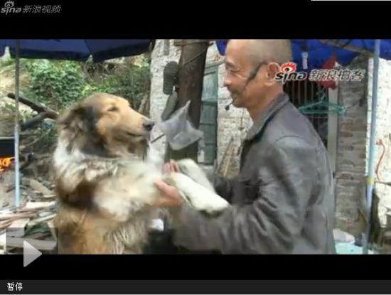 视频:67岁患癌老人收养300多条流浪狗