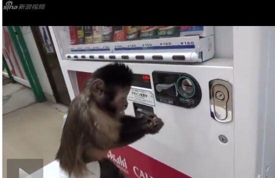 逆天小猴自己按售卖机买饮料喝