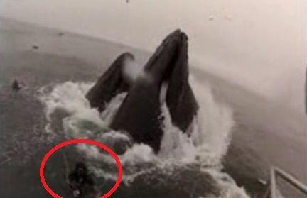 视频:实拍最敬业摄影师险被巨鲸活吞