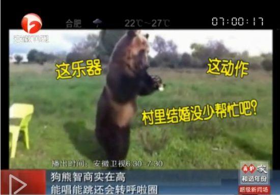 实拍狗熊吹拉弹唱还能转呼啦圈
