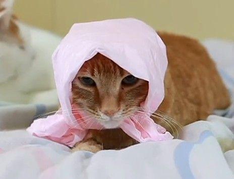 猫叔变身花姑娘